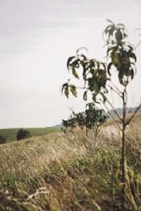 Fruit trees at Eaglerise Farm